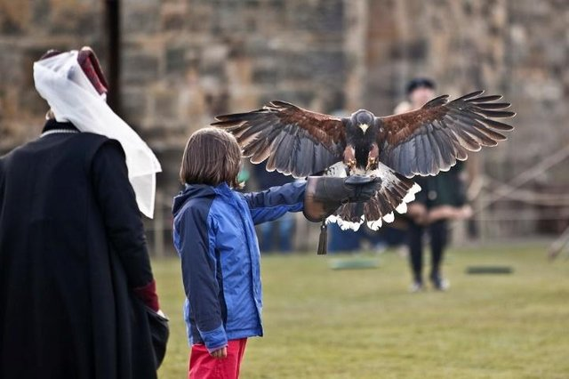 Falconry, broomstick training and much more is due to resume from April 12.