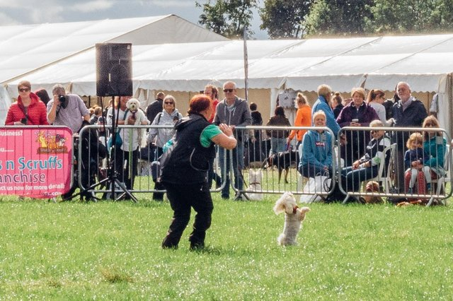 Crowds enjoying canine action at a previous The North East Dog Festival. Picture by Ben Heward Images.