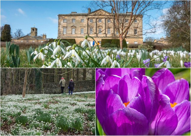 Spring at Howick Hall Gardens. Pictures: Jane Coltman