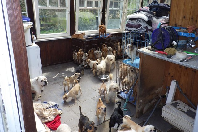 Some of the conditions and kennels the dogs were kept in at Lynn Stoker's property.