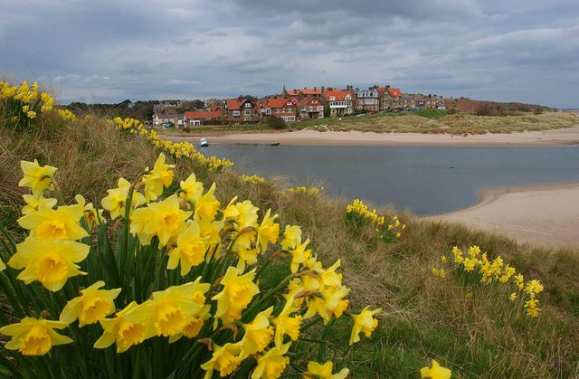 Looking from Church Hill across to Alnmouth. Picture by Jane Coltman