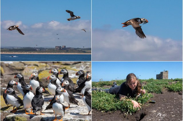 Puffins on the Farne Islands. Pictures: SWNS