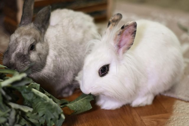 Rabbits are much happier when they have a friend to live with!