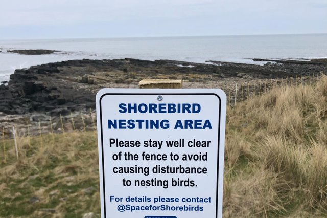 Visitors to the Northumberland coast are being asked to help protect nesting shorebirds.