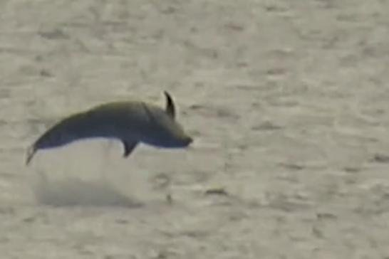 The dolphins were spotted splashing in the water on Sunday morning/ Photo: Ivor Clark