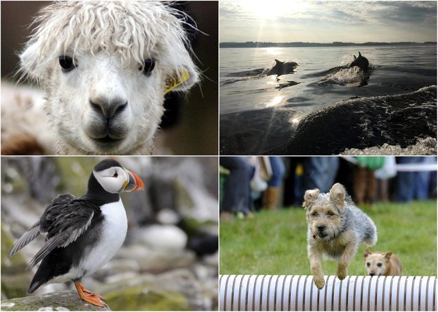 Some of the many creature highlights in Northumberland.