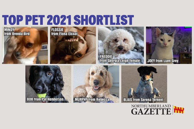 You can vote now in our Top Pet shortlist.