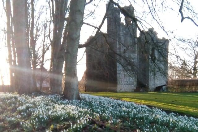 Snowdrops at Etal Castle. Pictures by Jean Eisenhauer.