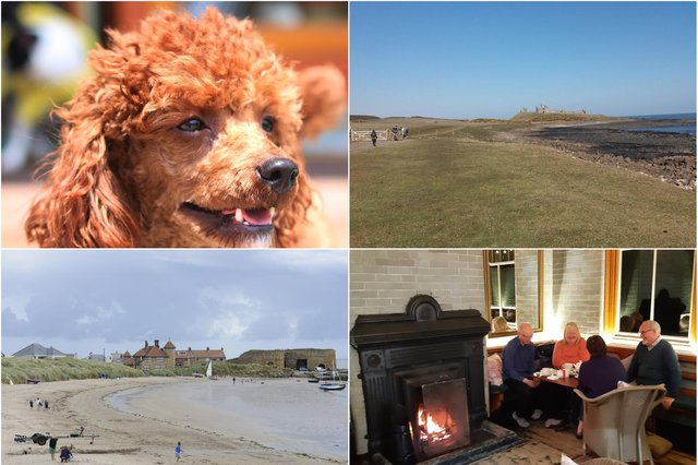 Dog-friendly places in Northumberland.