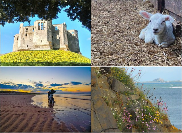 You have been sharing your spring photographs taken across Northumberland.