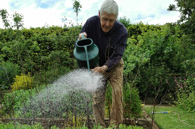 Watering sweet corn and peas. Picture courtesy of Tom Pattinson.