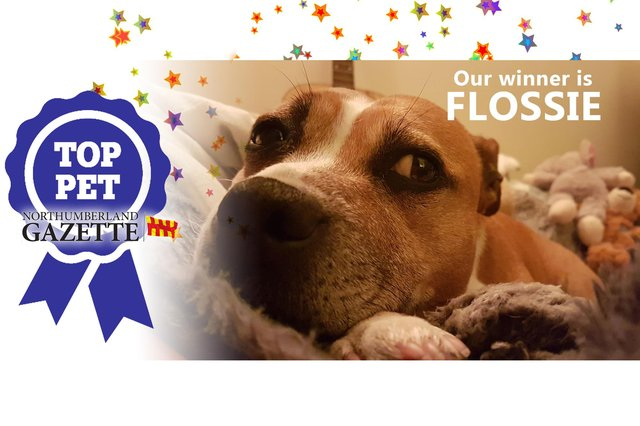 Flossie is the winner of our Top Pet competition!