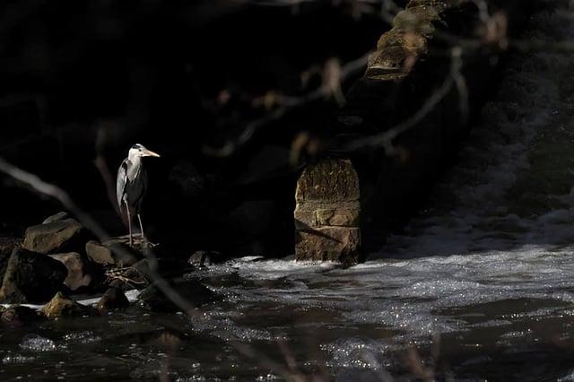 Heron by John Millican.