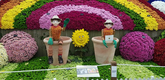 Chrysanth Society display. Picture by Tom Pattinson