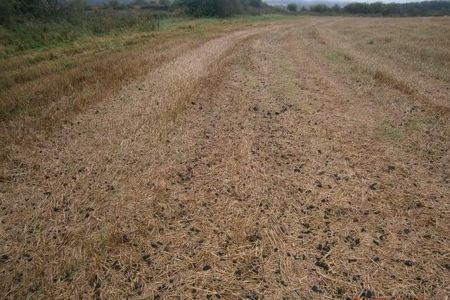 The sludge spread on the incorrect field.