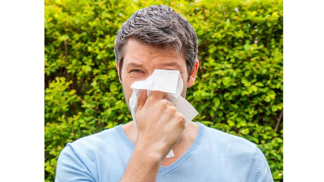Northumberland is set to experience very high pollen counts this weekend.